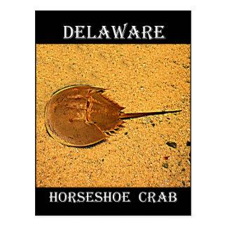 Postal Cangrejo de herradura de Delaware
