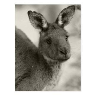 Postal Canguro en el sur de Australia del santuario de