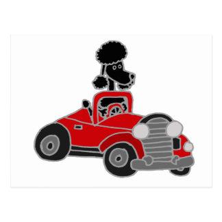 Postal Caniche negro que conduce el coche convertible