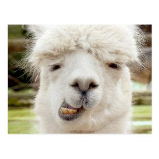 Postal Cara divertida de la alpaca