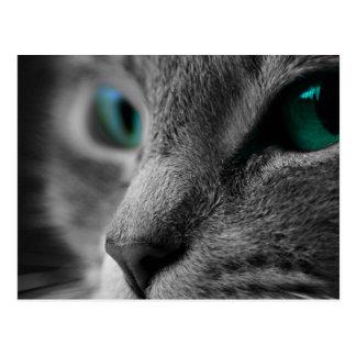Postal Cara gris del gato de la piel con los ojos verdes