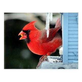 Postal Cardenal en el hielo - pájaro