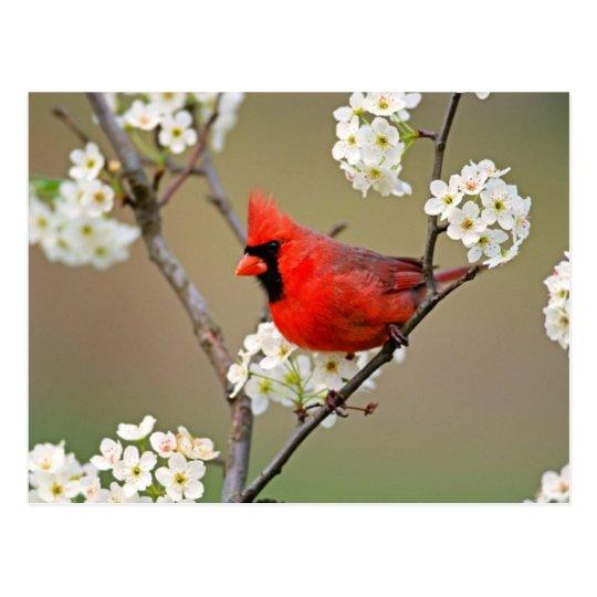 Postal cardinal