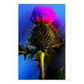 Postal Cardos, la flor de Escocia