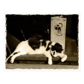 Postal Cat at a restaurant near menu en París, France