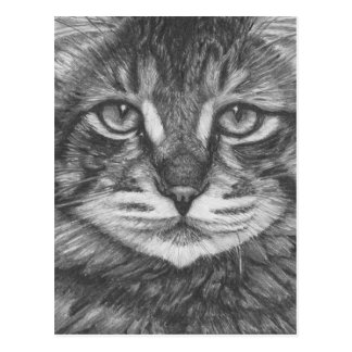 Postal Cat postcard. Pencil drawing