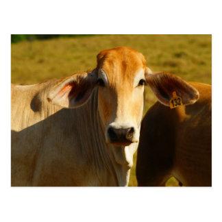 Postal Cathine la vaca linda
