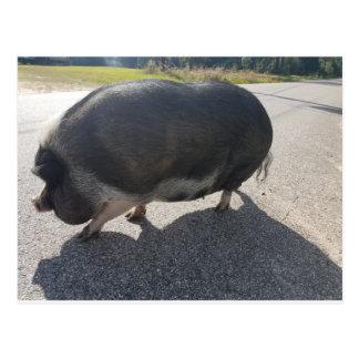 Postal Cerdo grande