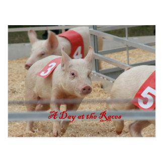 Postal Cerdo que compite con, fotografía de la raza del