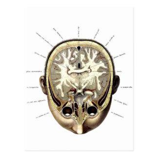 Postal Cerebro expuesto anatomía retra del monstruo del