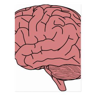Postal Cerebro humano