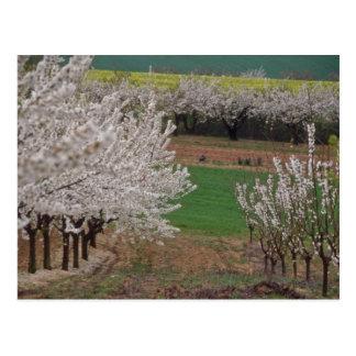 Postal cerezos florecientes blancos en flowe del valle de