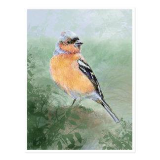Postal Chaffinch lindo, colección del pájaro de la