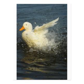 Postal Chapoteo del pato