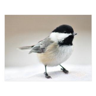 Postal Chickadee