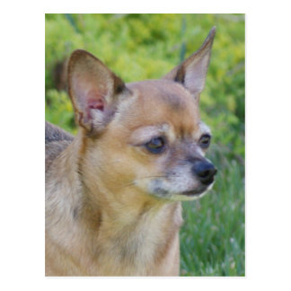 Postal Chihuahua