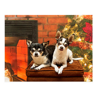 Postal Chihuahua del navidad