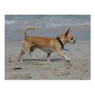 Postal Chihuahua en la playa