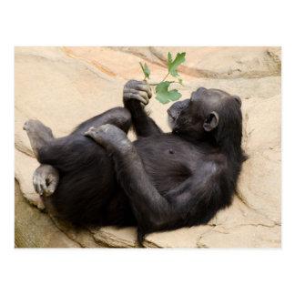 Postal Chimpancé de relajación