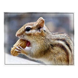 Postal Chipmunk con un cacahuete