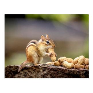Postal Chipmunk que come un cacahuete