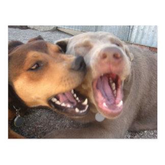 Postal chistosa del perro