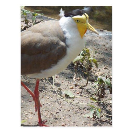 Postal chistosa linda del pájaro