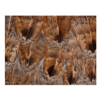 Postal Ciérrese para arriba de las plumas de Brown
