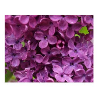 Postal ciérrese para arriba de lila púrpura oscura