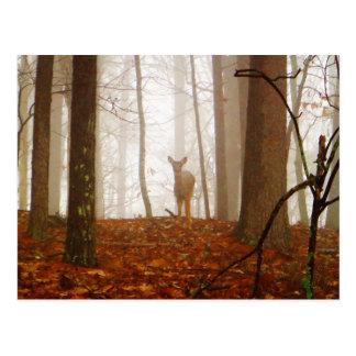 Postal Ciervos en la niebla