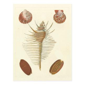 Postal Cinco de Seashells buenos