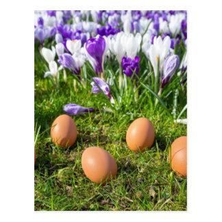 Postal Cinco huevos flojos que mienten cerca de azafranes