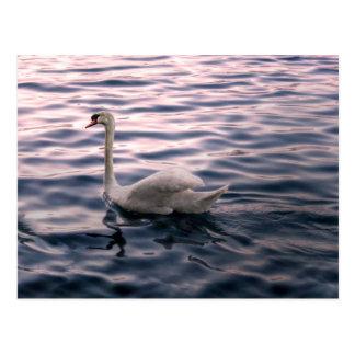 Postal Cisne en la oscuridad