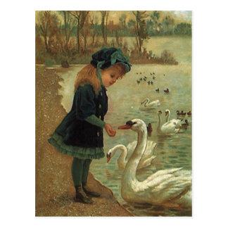 Postal Cisnes de trompetista de alimentación del