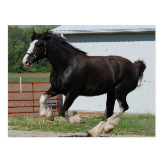 Postal Clydesdale negro