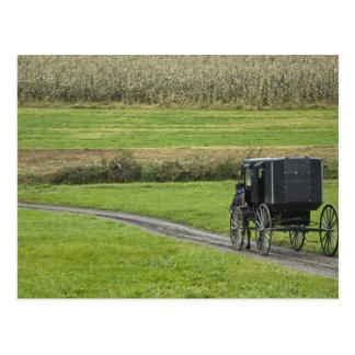 Postal Cochecillo de Amish en el carril de la granja,