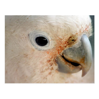 Postal Cockatoo