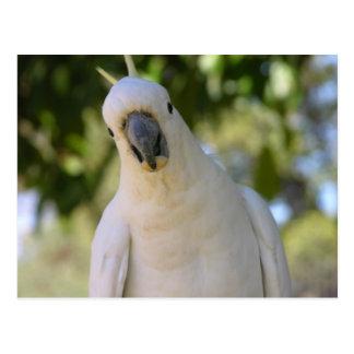Postal Cockatoo con cresta Kakadu del azufre