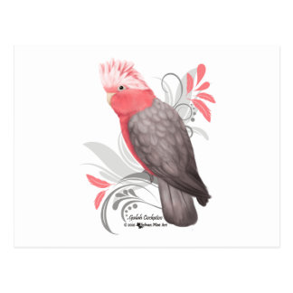 Postal Cockatoo de Galah