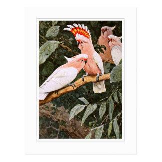 Postal Cockatoo del inca; por W.Kuhnert