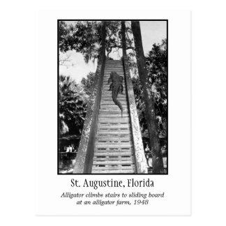Postal Cocodrilo retro de St Augustine