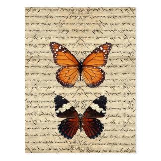 Postal Colección de las mariposas del vintage