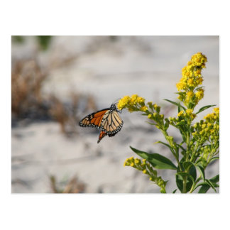 Postal Colgante en monarca