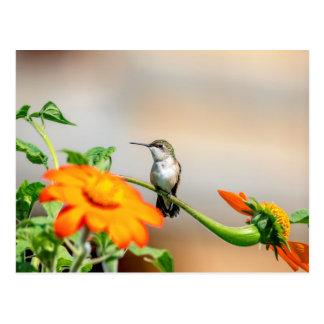 Postal Colibrí en una planta floreciente