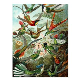 Postal Colibríes de Ernst Haeckel, árboles de los pájaros