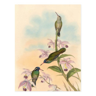 Postal Colibríes y orquídeas de Gould