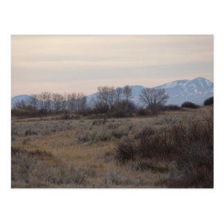 Postal Colinas de Sweetgrass del ciervo mula D0004