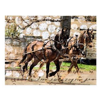 Postal Collage de dos del caballo técnicas mixtas del