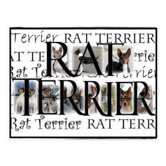 Postal Collage de Terrier de rata
