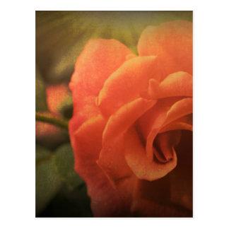 Postal Color de rosa anaranjado